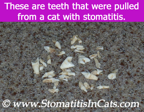 Cat teeth removed due to stomatitis